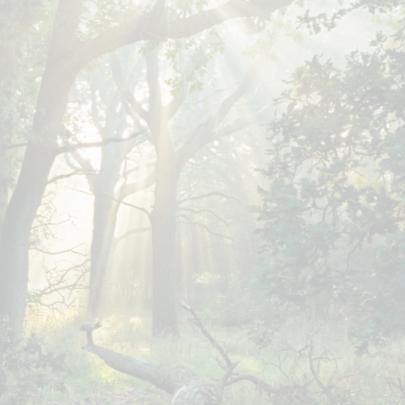 4k Het regent zonnestralen 2