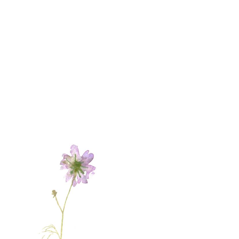 Bedankkaart, aquarel Cosmea 2