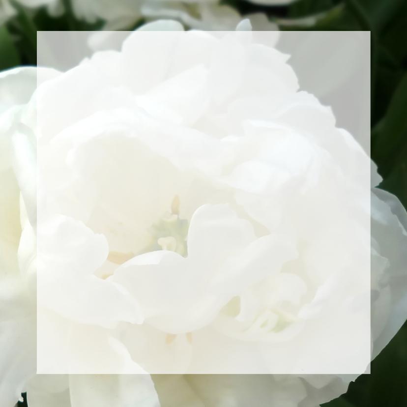 Bedankt bloemen - witte tulp rozen 3