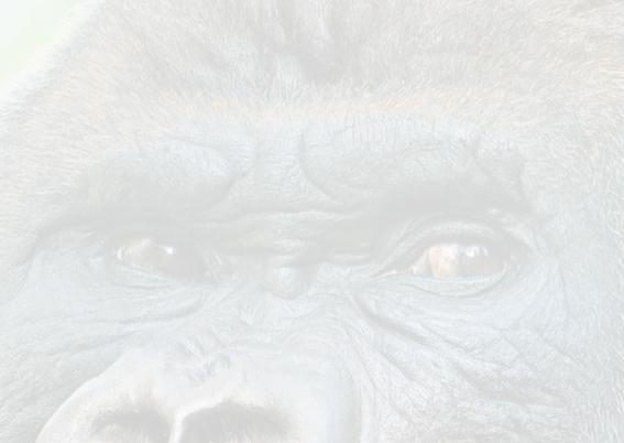 Beterschapkaart-Gorilla 2