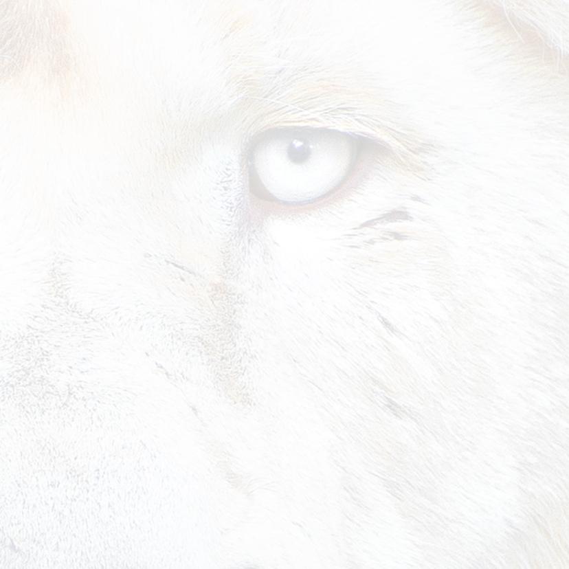 Beterschapkaart- Witte Leeuw 3