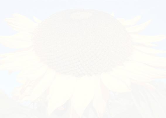 Beterschapkaart - Zonnebloem  3