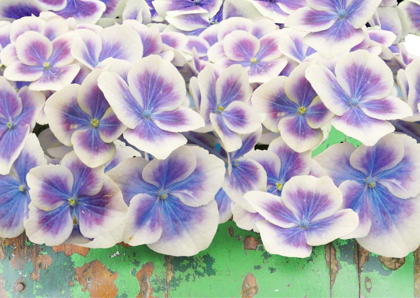 Beterschapskaart Hortensia bloemen op steigerhout 2