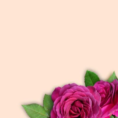 Beterschapskaart met rode roos 3