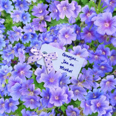 Bloemen met tekst GET WELL SOON 3