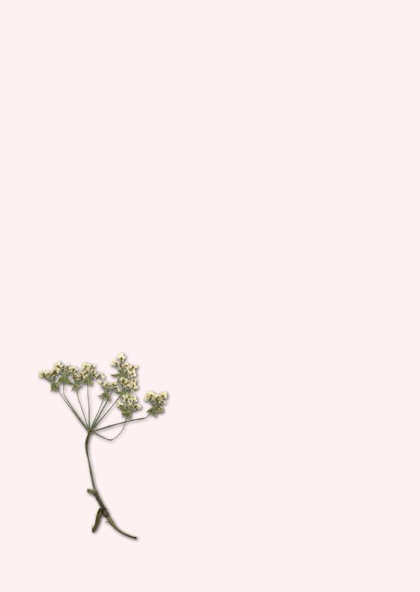 Bloemenkaarten - Wilde bloem 3