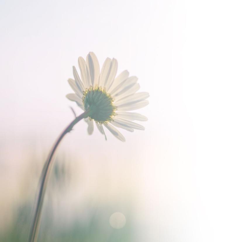 Condoleance - foto bloem veel sterkte 2