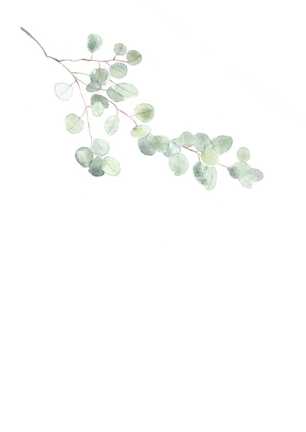 Condoleance kaart met eucalyptus tak - natuur 2