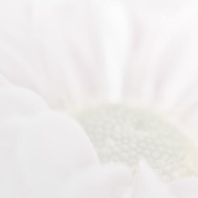 Condoleance met roze chrysant 2