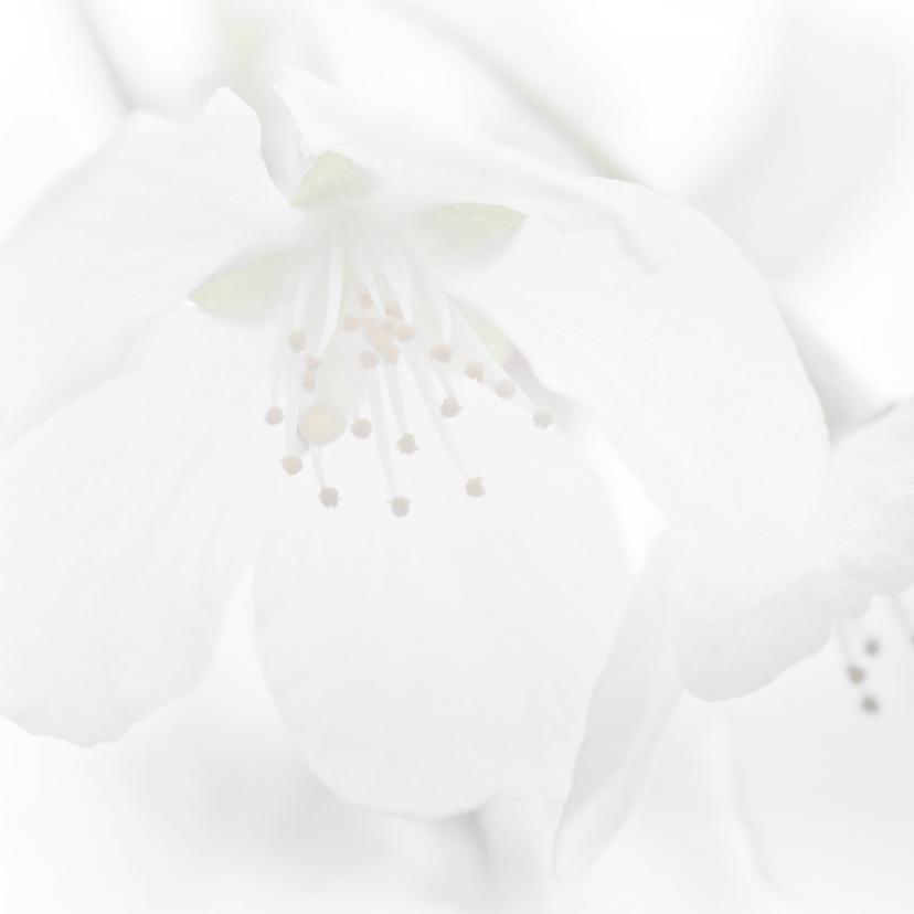 Condoleance met witte bloesem 2