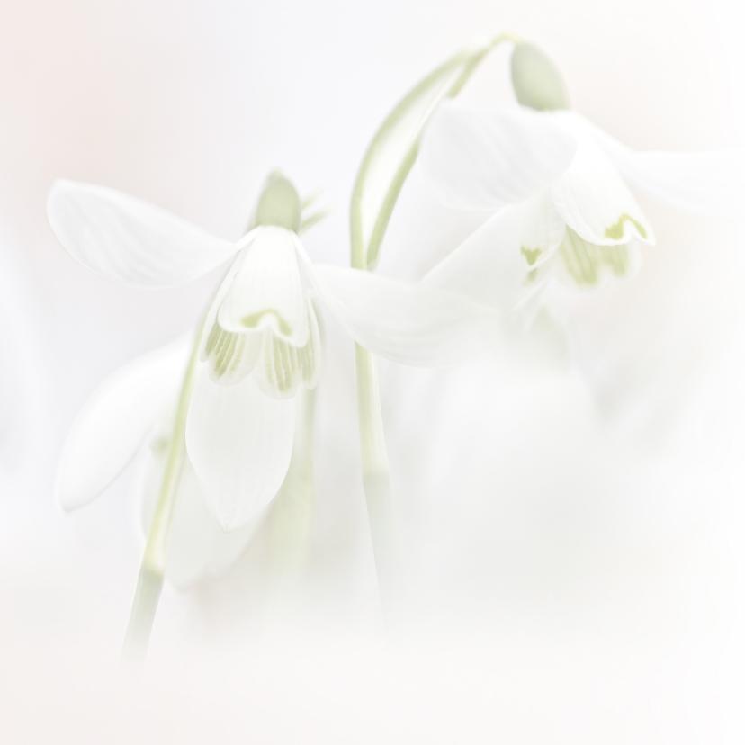 Condoleance sneeuwklokjes kleur 2