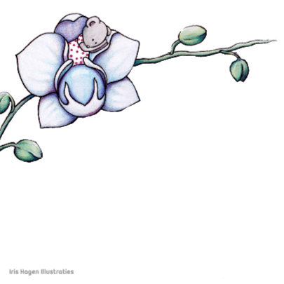 Condoleancekaart Orchidee - IH 2