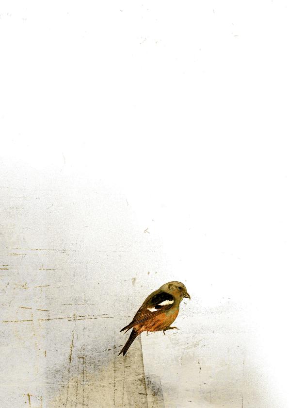 Condoleancekaart vogel op papier 2