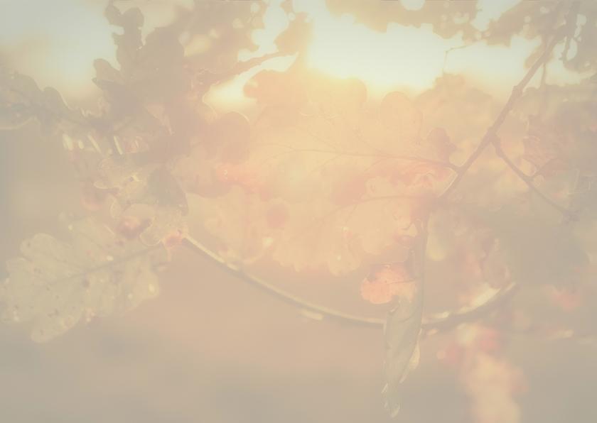 condoleancekaart zonlicht MM  3