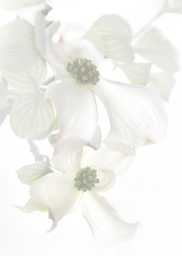 Condoleren met Cornus-bloemen 2