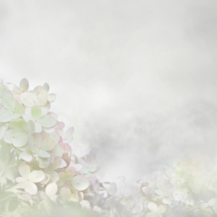 Deelneming met hortensia 2