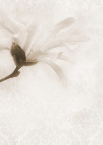Deelneming met magnolia -sepia- 2