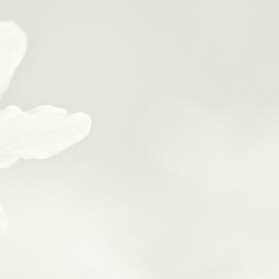 Deelneming met witte bosanemoon 3