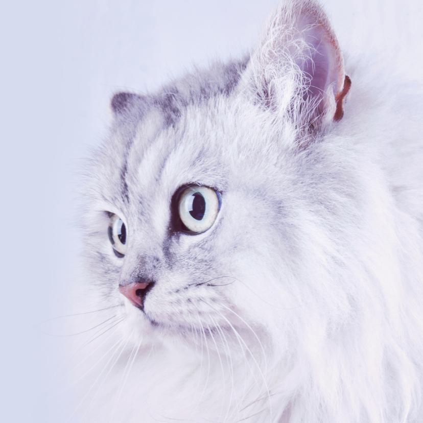 Dieren kat liefs 3