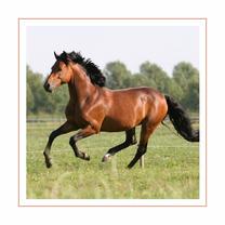 Dierenkaart galopperend paard