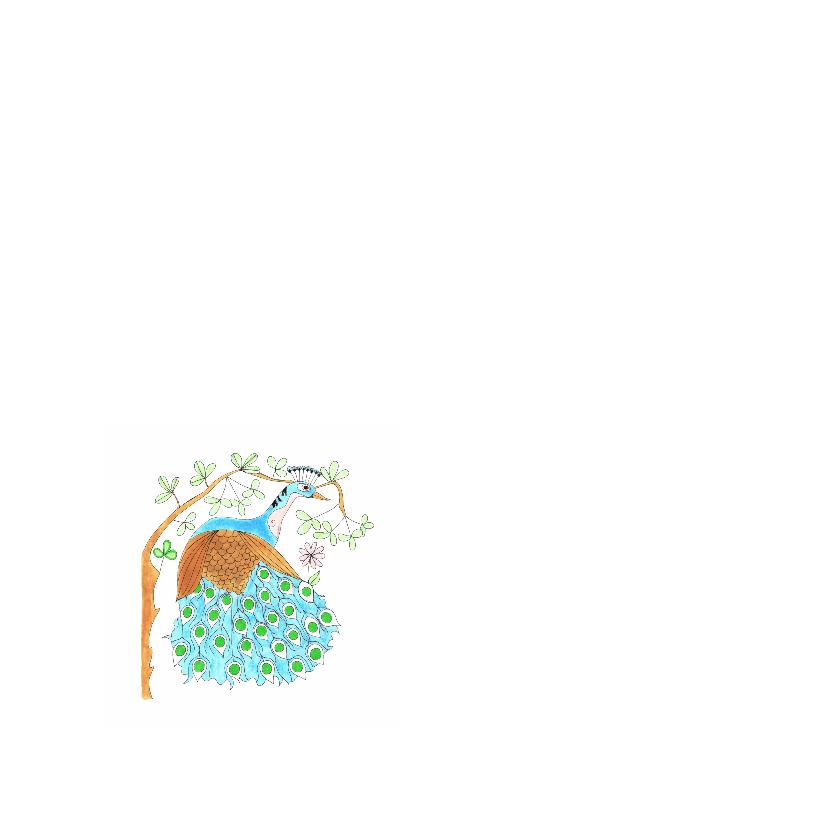 Dierenkaart Pauw in de bossen 2
