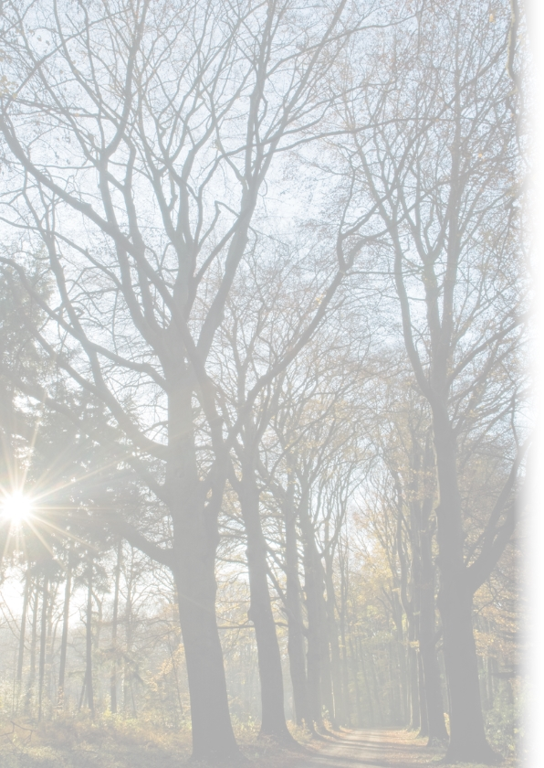 Donker bomenpad met lage zon 2