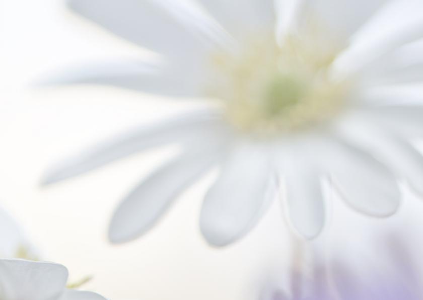 Feest met anemonen 2