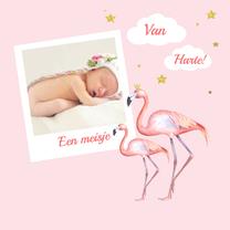 Felicitatiekaarten - Felicitatie meisje flamingo foto