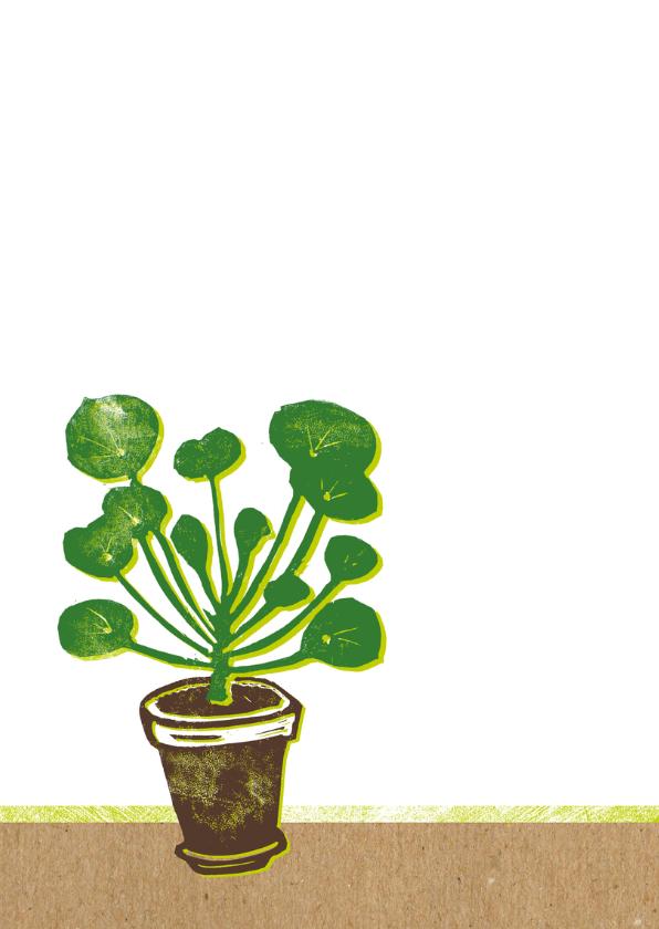 Felicitatie nieuw huis pannenkoekplant 2