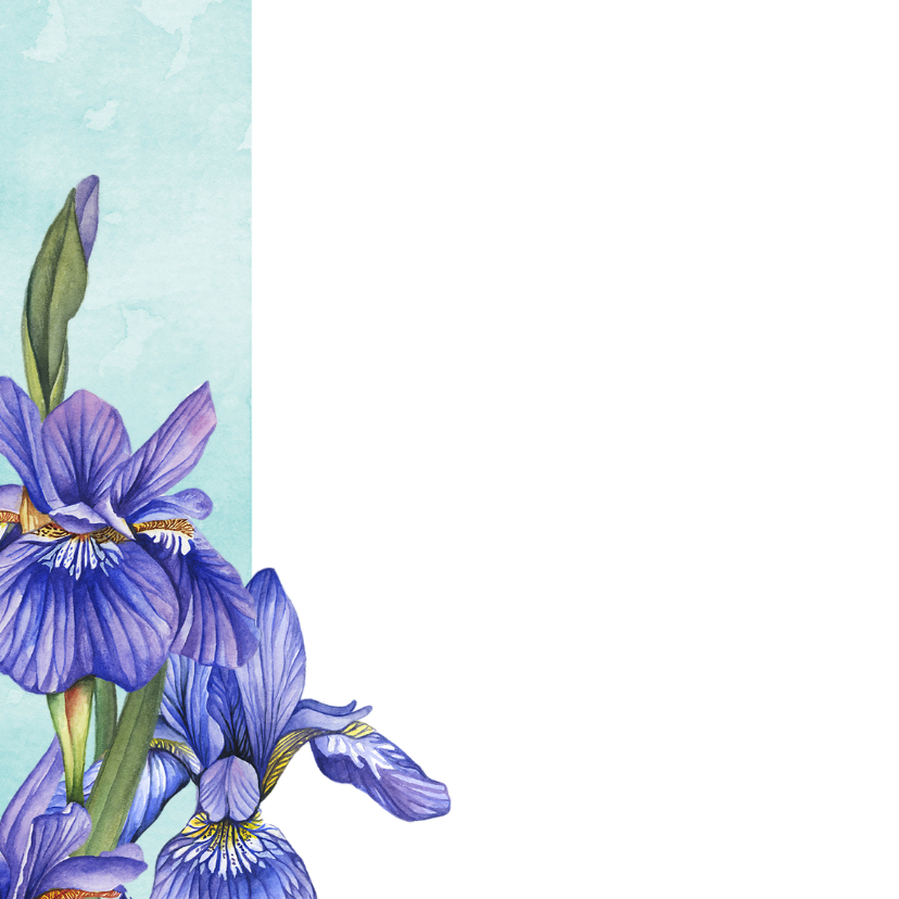 Felicitatiekaart Lisse in aquarel 2