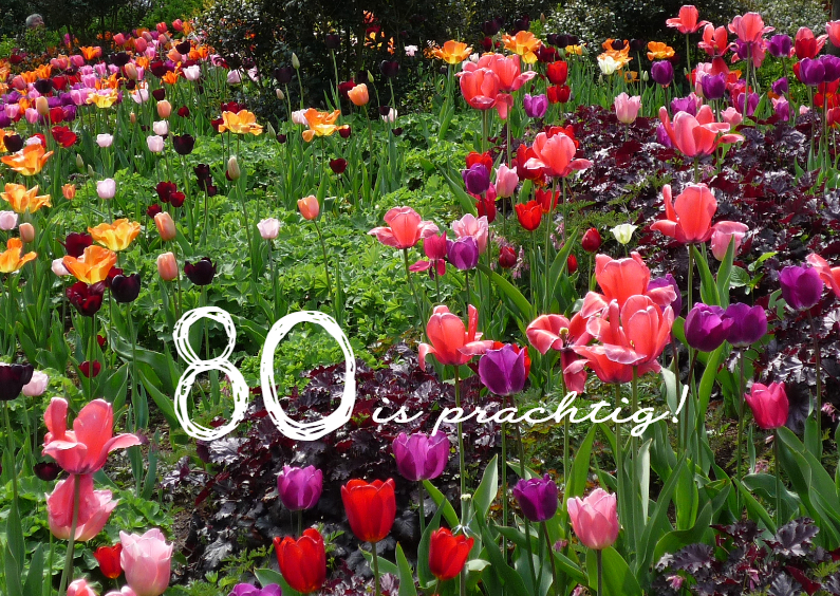 Extreem 80 Jarige Verjaardag Nqw 62 Wofosogo