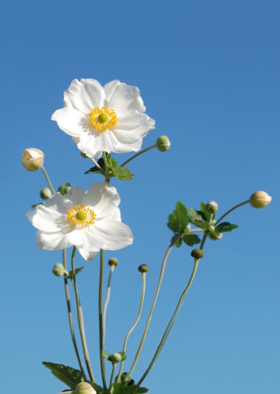 Bekend Foto met mooie witte bloemen - Bloemenkaarten - Kaartje2go @EX47