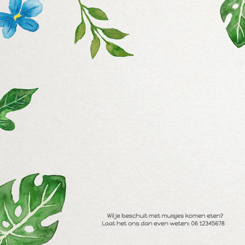 Geboorte bladeren jongen - DH 2