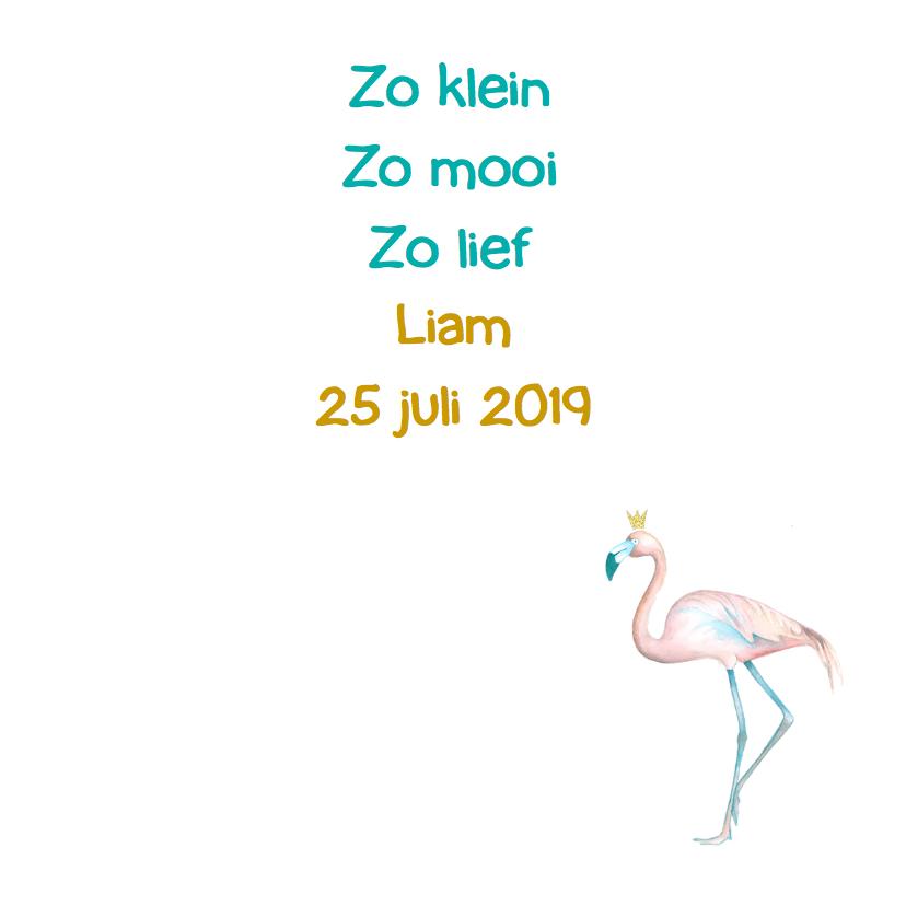 Geboorte flamingo jongen foto 3
