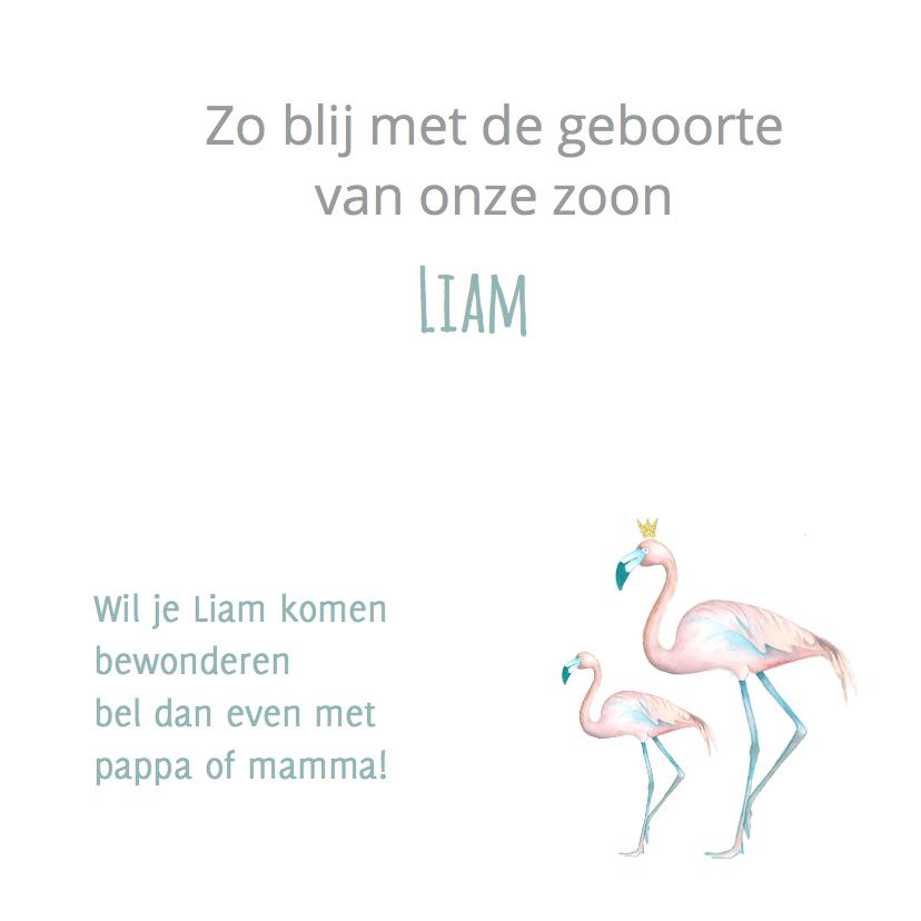 Geboorte flamingo jongen 3