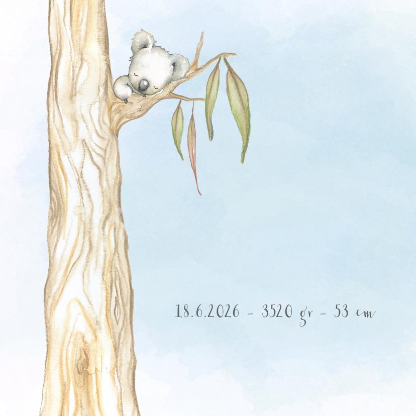 Geboortekaart koala-beer jongen 2