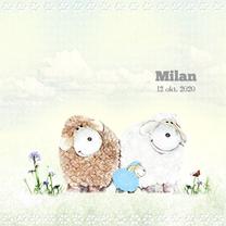Geboortekaartjes - Geboren jongen -schaapjes-