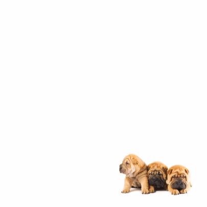 Gedichtenkaart met 3 lieve hondjes 3