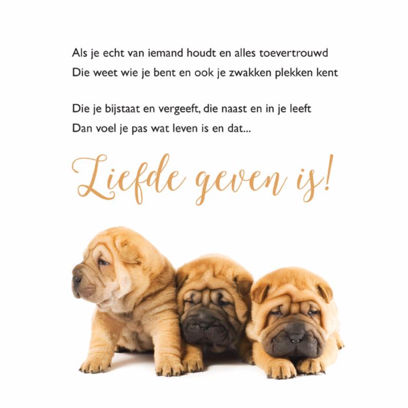 Gedichtenkaarten - Gedichtenkaart met 3 lieve hondjes