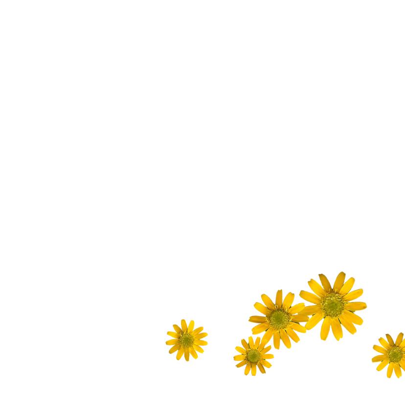 Gele/blauwe bloemetjes  3