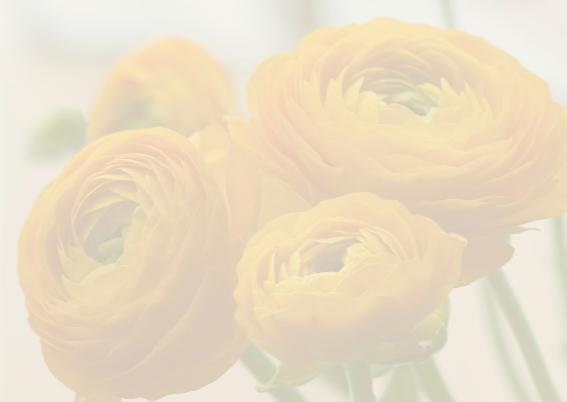 gele voorjaarsbloemen 3