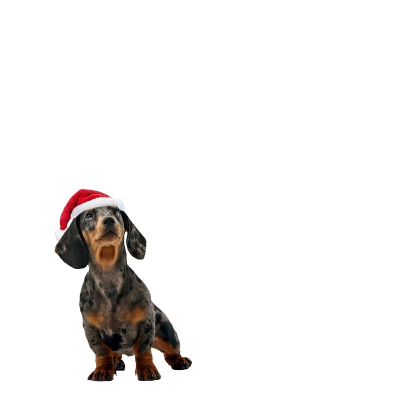 Grappige hond met gewei-isf 2