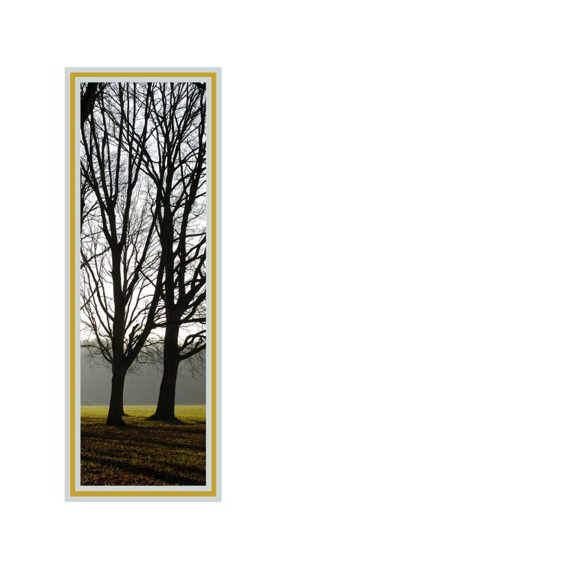 Hoge bomen in tegenlicht 2