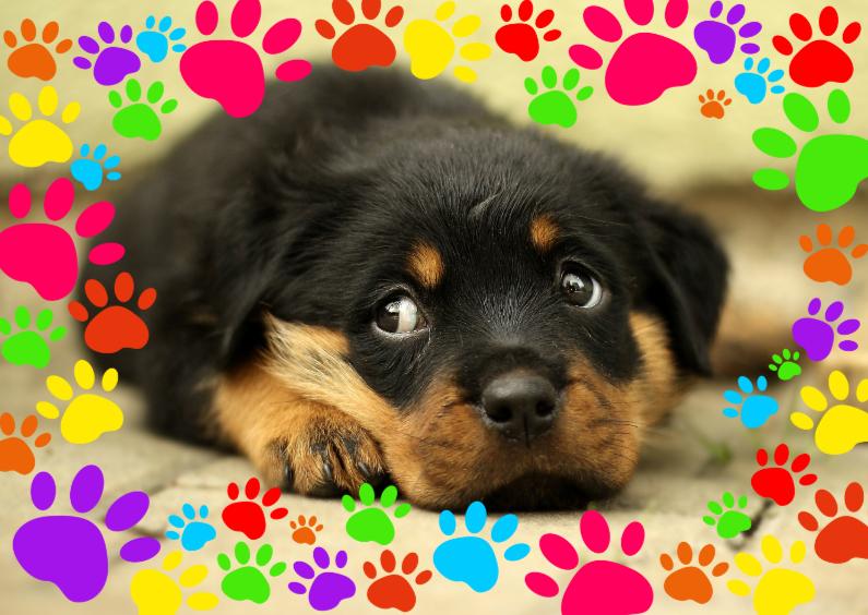 Hondenpootjes Dh Dierenkaarten Kaartje2go