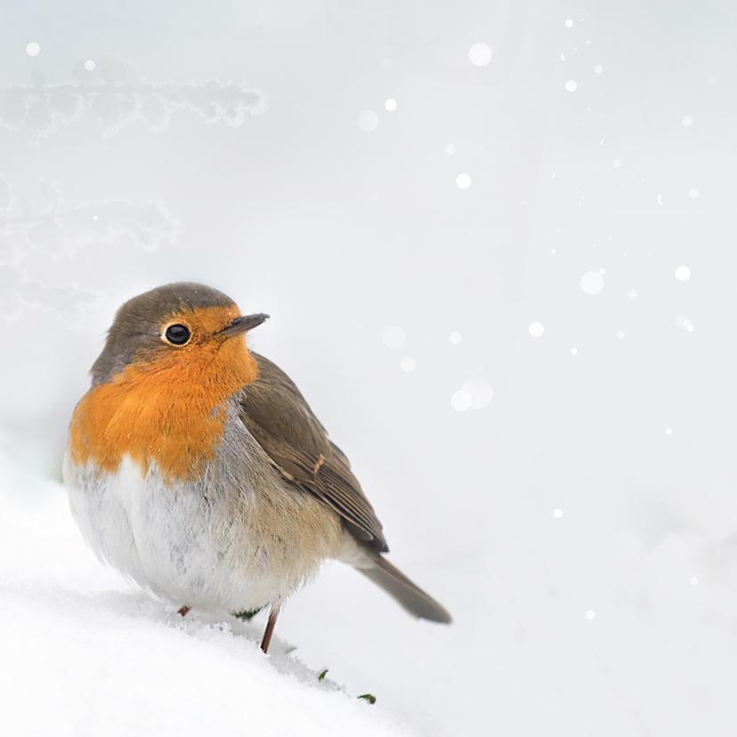 Hout met roodborst en sneeuw 2