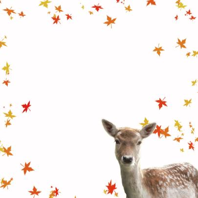 Jarig met herfstbladeren 3