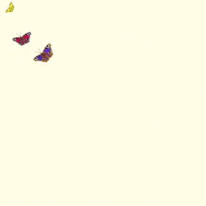 Jarig met vlinderhart 2