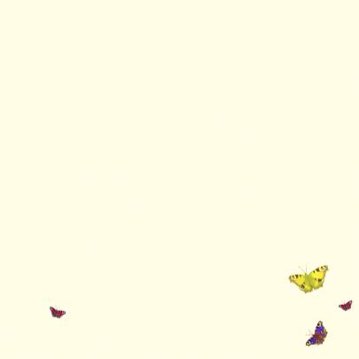 Jarig met vlinderhart 3