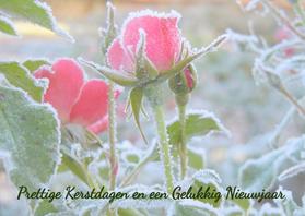 Kerstkaarten - Kerst Frozen Rose IW