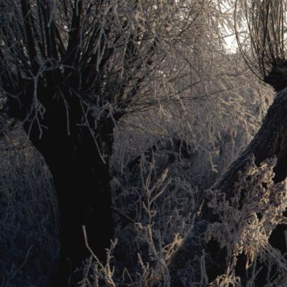 Kerstkaart foto betoverde winter bomen 2